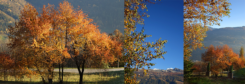 Automn view other Les Arcs and the Mont Pourri - Golden brown trees