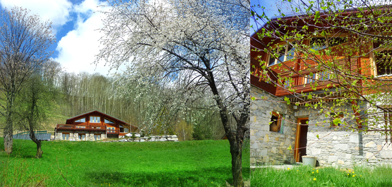 The cherry trees are in bloom - The birch's leaves are growing.